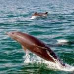 Qeshm Island - swimming with dolphins